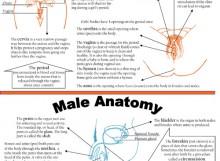 Anatomy - Female and Male